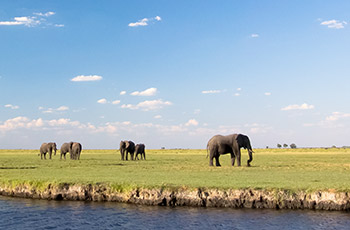 African Safari Experts • Guided African Safaris & Tours
