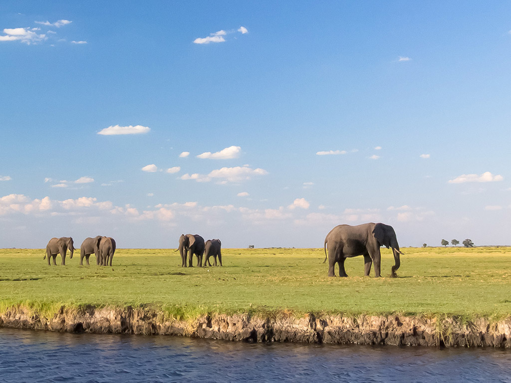 Elephants on the Chobe River